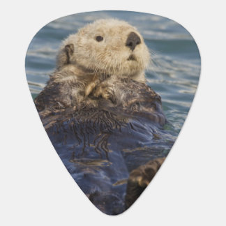 Sea otters play on icebergs at Surprise Inlet Guitar Pick