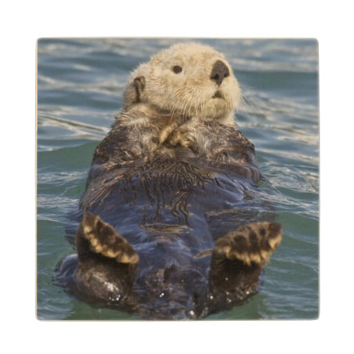 Sea otters play on icebergs at Surprise Inlet Wood Coaster