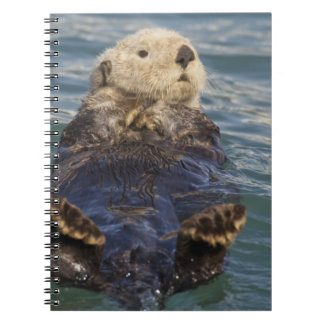 Sea otters play on icebergs at Surprise Inlet Notebook