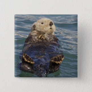 Sea otters play on icebergs at Surprise Inlet Pinback Button