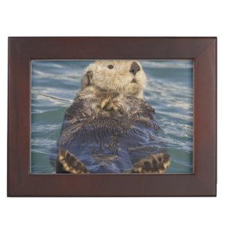 Sea otters play on icebergs at Surprise Inlet Keepsake Box