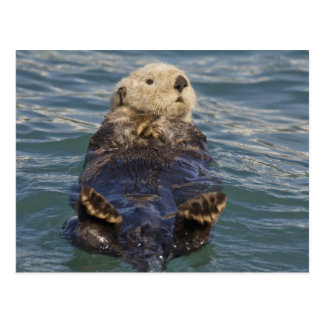 Sea otters play on icebergs at Surprise Inlet Postcard