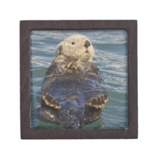Sea otters play on icebergs at Surprise Inlet Premium Gift Box