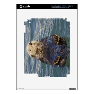 Sea otters play on icebergs at Surprise Inlet iPad 3 Decals