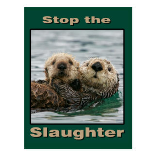 Sea Otters - Stop the Slaughter Postcard