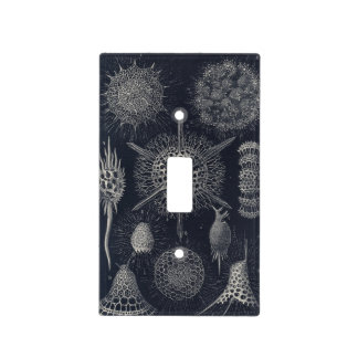 Sea Radiolarians Vintage 1904 Light Switch Cover