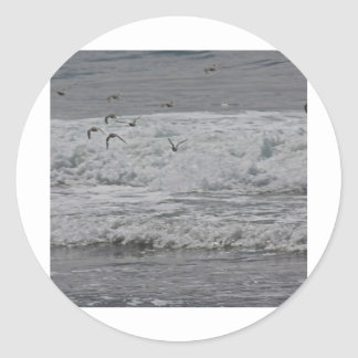 Sea & Sand Pipers! Classic Round Sticker