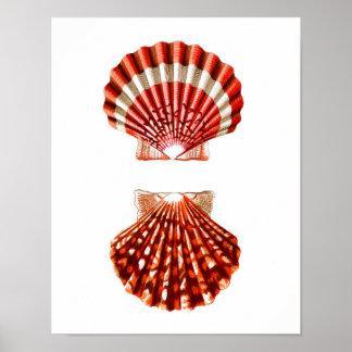 Sea Shell Art Print no.9 Beach Home Decor