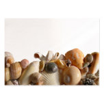 Sea Shell Border Place Cards Business Card Template