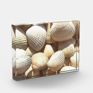 Sea Shell Collection Summer Beach Sunny Award