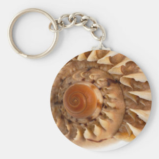 Sea shell macro detail basic round button keychain