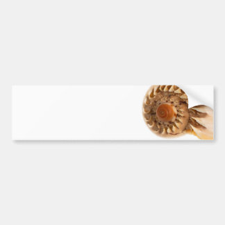 Sea shell macro detail bumper sticker