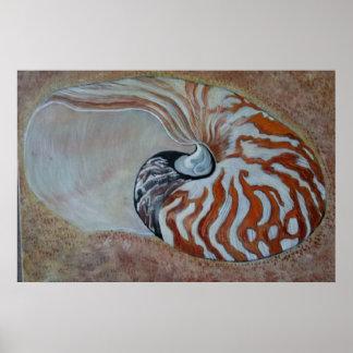 sea shell nautilus poster