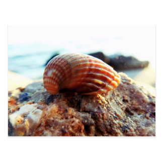 Sea Shell Post Cards