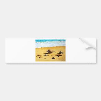 Sea Shell Series I Bumper Sticker
