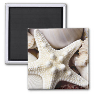 Sea Shell Starfish Background - Beach Shells 2 Inch Square Magnet