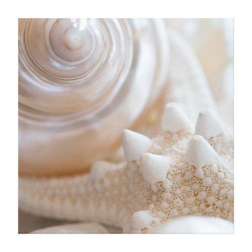 Sea Shell & Starfish Background - Beach Shells Canvas Print