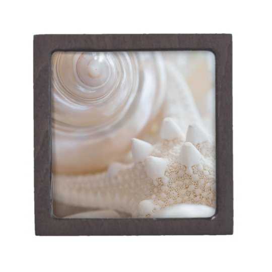 Sea Shell & Starfish Background - Beach Shells Jewelry Box