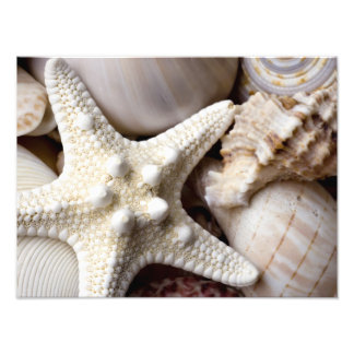 Sea Shell Starfish Background - Beach Shells Photo Print