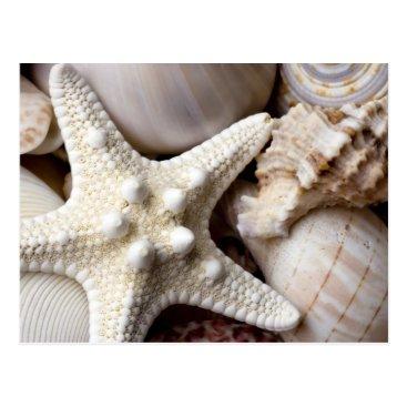 SilverSpiral Sea Shell Starfish Background - Beach Shells Postcard