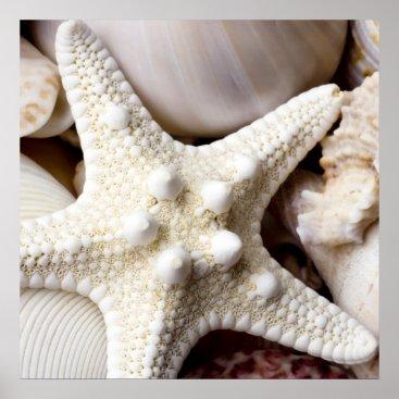 SilverSpiral Sea Shell Starfish Background - Beach Shells Poster