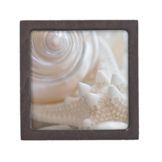 Sea Shell & Starfish Background - Beach Shells Premium Gift Boxes