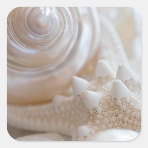 Sea Shell & Starfish Background - Beach Shells Square Sticker