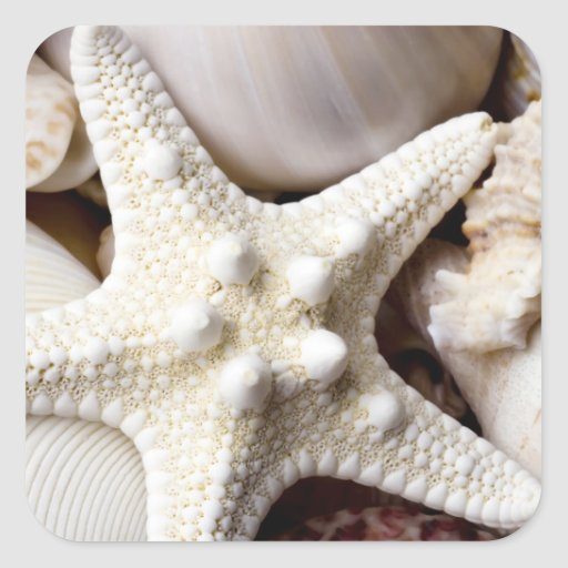 Sea Shell Starfish Background - Beach Shells Square Stickers
