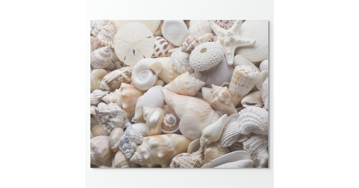 sea shell  u0026 starfish background