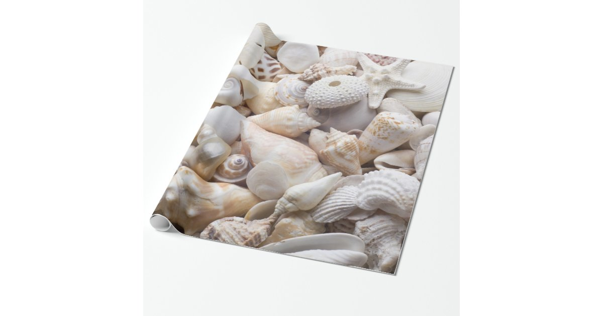Sea Shell Amp Starfish Background Beach Shells Wrapping