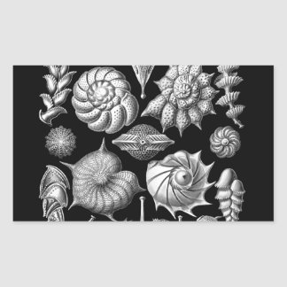 Sea Shells and Fossils in Black and White 1 Rectangular Sticker
