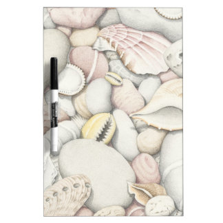 Sea Shells and Pebbles in Coloured Pencil Dry Erase Board