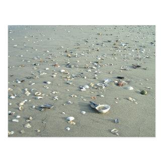 Sea Shells at Imperial Beach, California Postcard