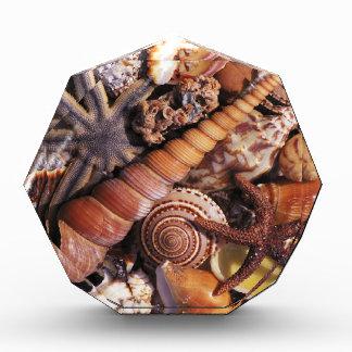 Sea shells award