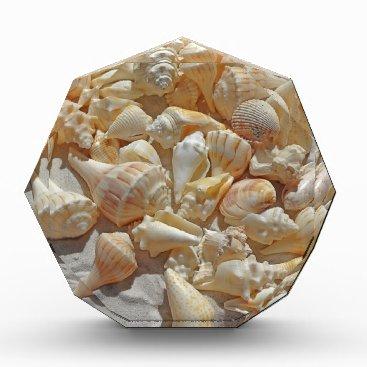 Beach Themed sea-shells bg acrylic award