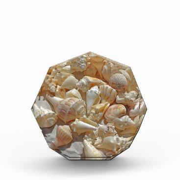 Beach Themed sea-shells bg award