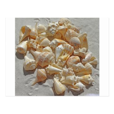 Beach Themed sea-shells bg postcard