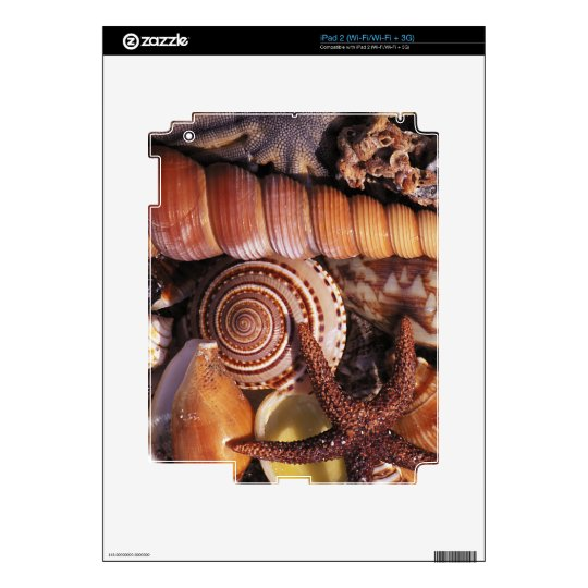 Sea shells decal for the iPad 2