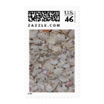 Sea shells Of sanibel Postage Stamps
