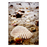 Sea Shells on Krabi Beach  Card