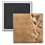 Sea shells on sand 2 inch square magnet