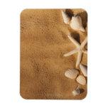Sea shells on sand rectangular photo magnet