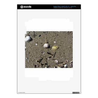 Sea shells on sand. Summer beach background iPad 3 Decals