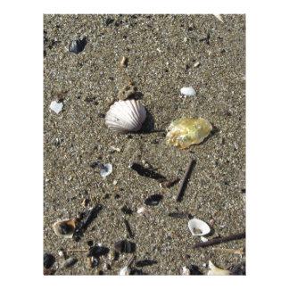Sea shells on sand. Summer beach background Letterhead