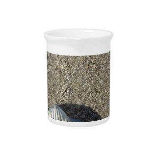 Sea shells on sand. Summer beach background Pitcher