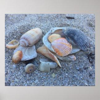 Sea Shells Paradise Beach Poster