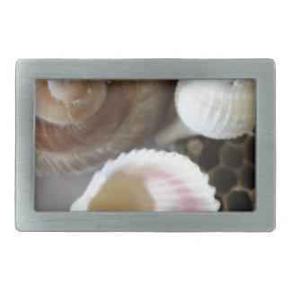sea shells photograph rectangular belt buckle