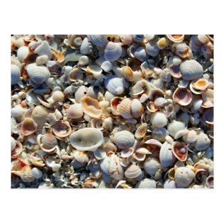 Sea Shells Postcards