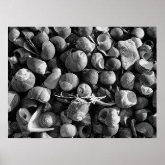 Sea shells posters