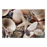 Sea Shells Print